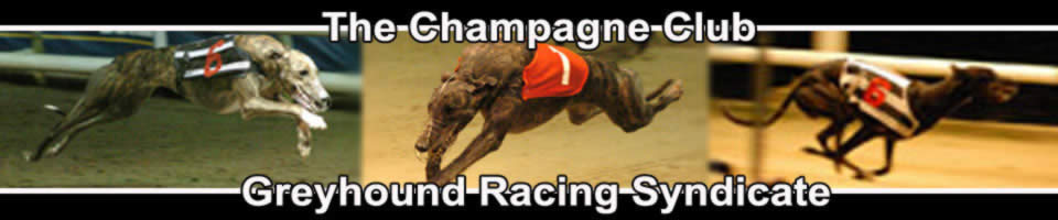 The Champagne Club Greyhound Racing Syndicate